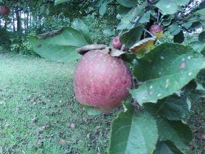 Autumn 2009 001