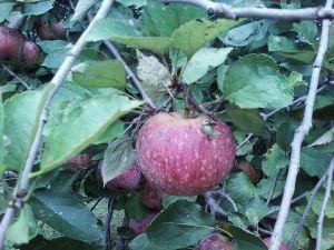 Autumn 2009 002