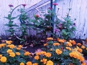 Autumn 2009 004