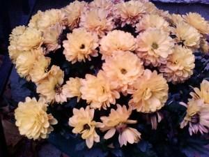 Autumn 2009 005