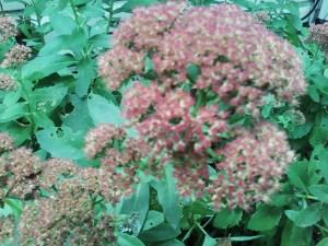 Autumn 2009 006