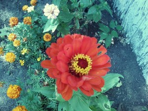 Color From The Flower Garden